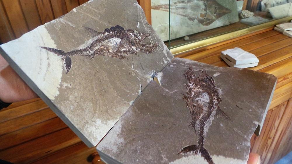 fossils 3